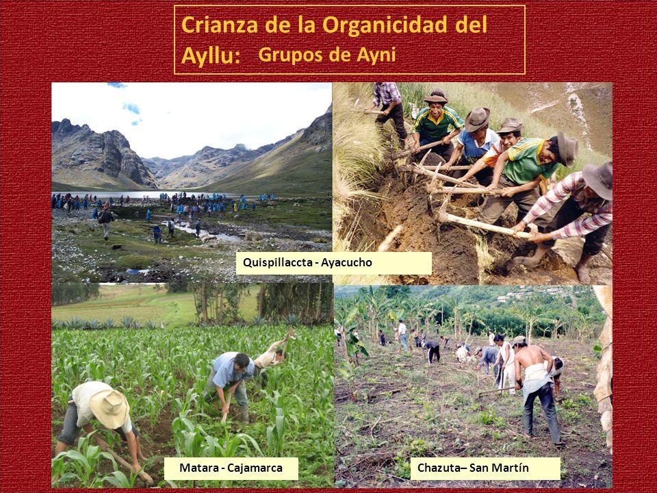 Crianza de la Organicidad del Ayllu: Grupos de Ayni Quispillaccta - Ayacucho Chazuta– San MartínMatara - Cajamarca