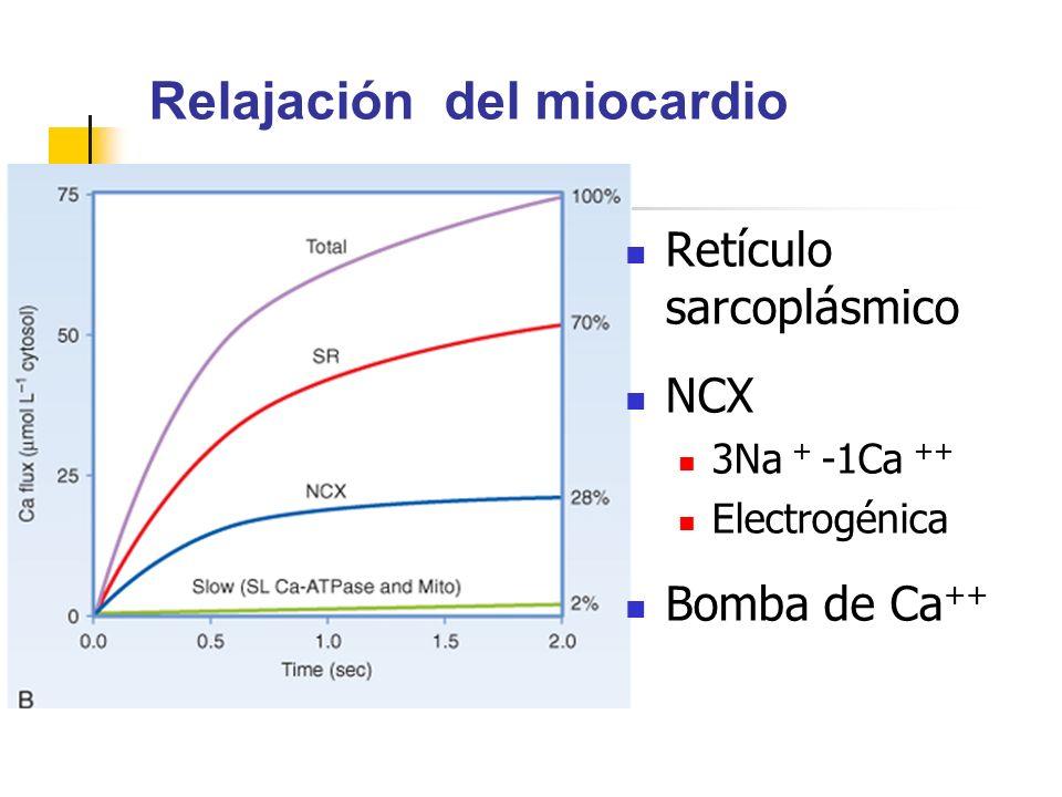 Relajación del miocardio Retículo sarcoplásmico NCX 3Na + -1Ca ++ Electrogénica Bomba de Ca ++