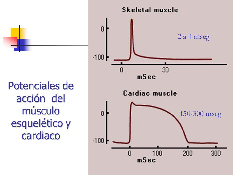 Potenciales de acción del músculo esquelético y cardiaco 2 a 4 mseg 150-300 mseg