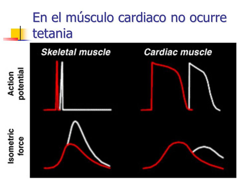 En el músculo cardiaco no ocurre tetania