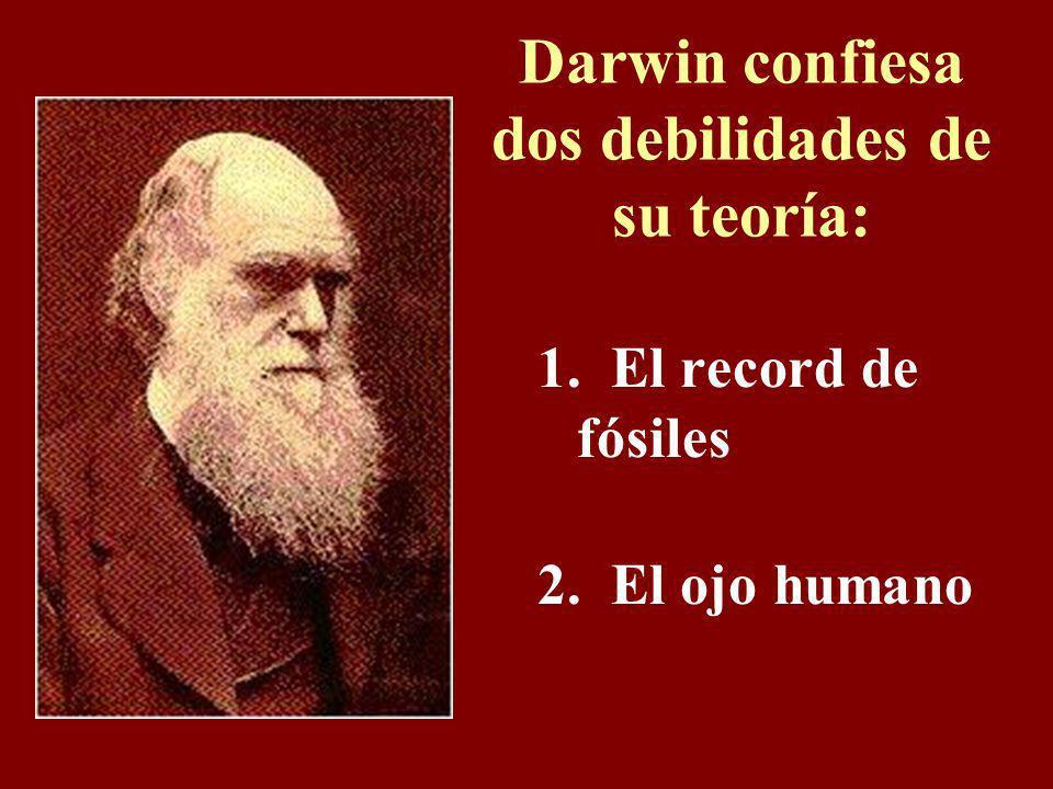 Racismo Darwin enseña que el moreno se evolucionó primero del simio, y la cumbre de toda la evolución es el hombre blanco. (¿Qué tipo se supone invent