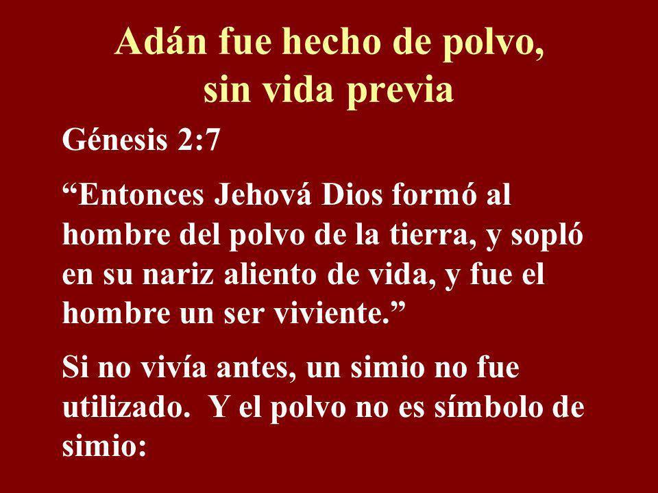 Contradicciones ¿Se fijó que la Biblia dice que el primer hombre tenía moralidad, inteligencia y lenguaje? La evolución dice que el primer hombre no t