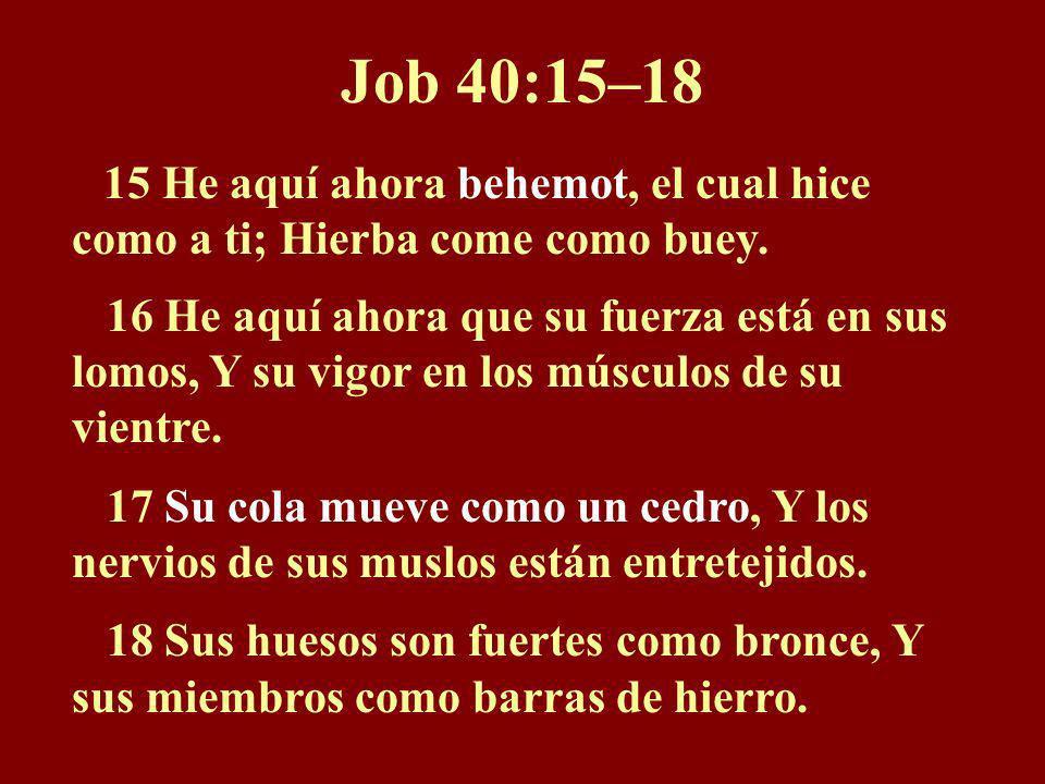 Posibles referencias Posibles referencias a dinosaurios en la Biblia: Job 3:8; 40:15-18; 41:1-7 Salmo 74:14; 91:13; 104:25-26 Isaías 27:1; 51:9 Jeremí
