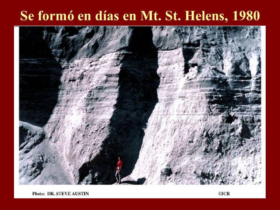 El Gran Cañón Dicen que se formó sobre millones de años por el pequeño río Colorado abajo. Pero se formó rápido con el diluvio de Noé. He aquí un ejem