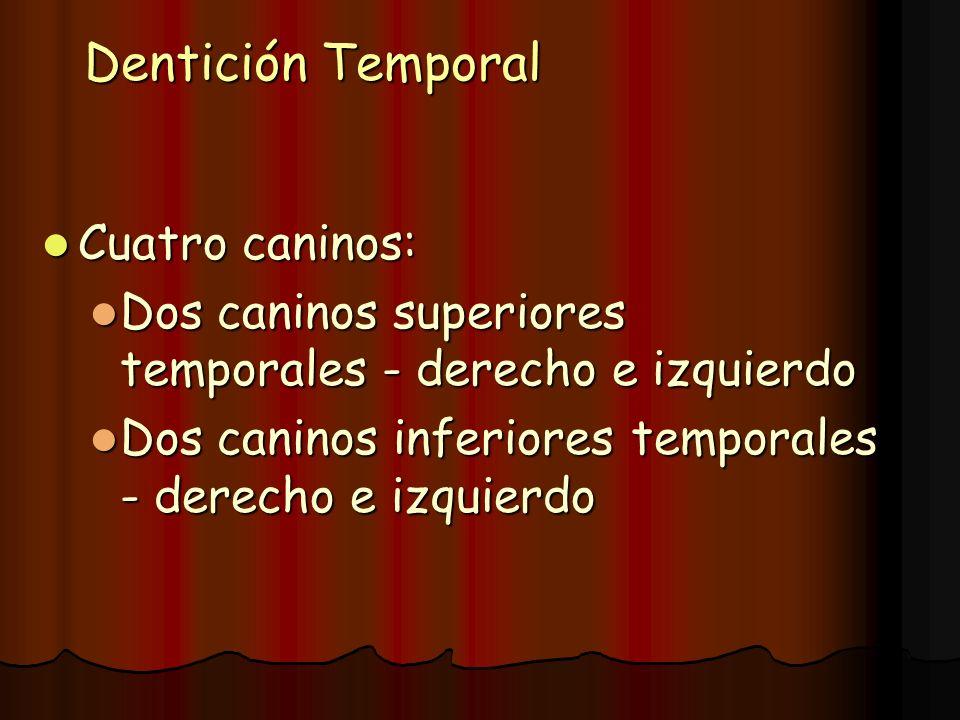 Dentición Temporal Cuatro caninos: Cuatro caninos: Dos caninos superiores temporales - derecho e izquierdo Dos caninos superiores temporales - derecho