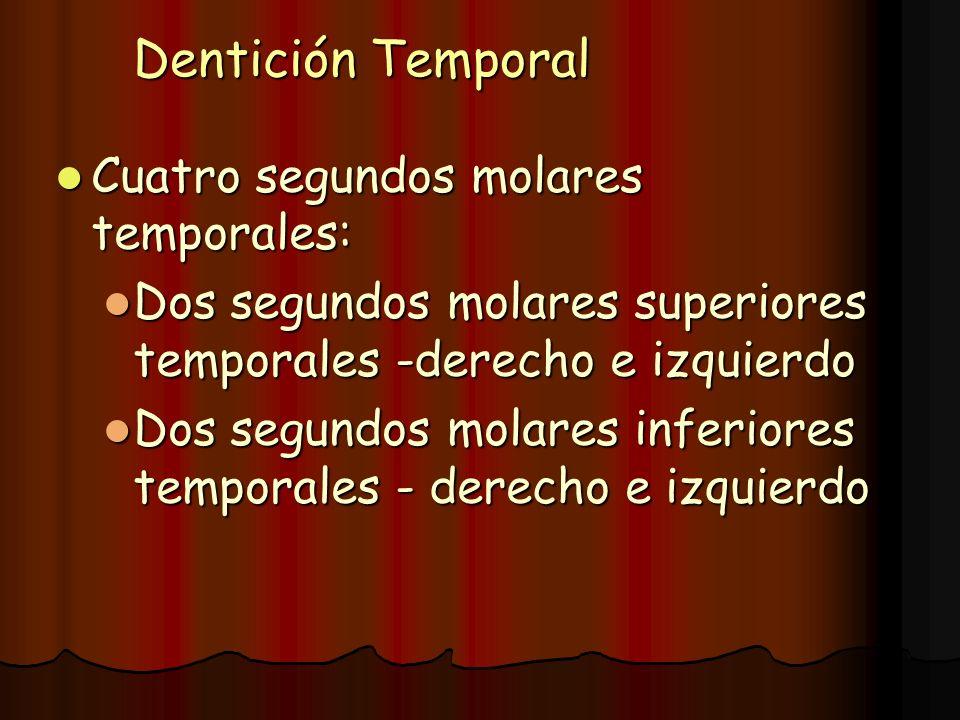 Dentición Temporal Cuatro segundos molares temporales: Cuatro segundos molares temporales: Dos segundos molares superiores temporales -derecho e izqui