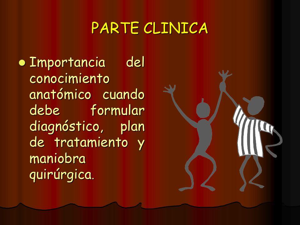 PARTE CLINICA Importancia del conocimiento anatómico cuando debe formular diagnóstico, plan de tratamiento y maniobra quirúrgica. Importancia del cono