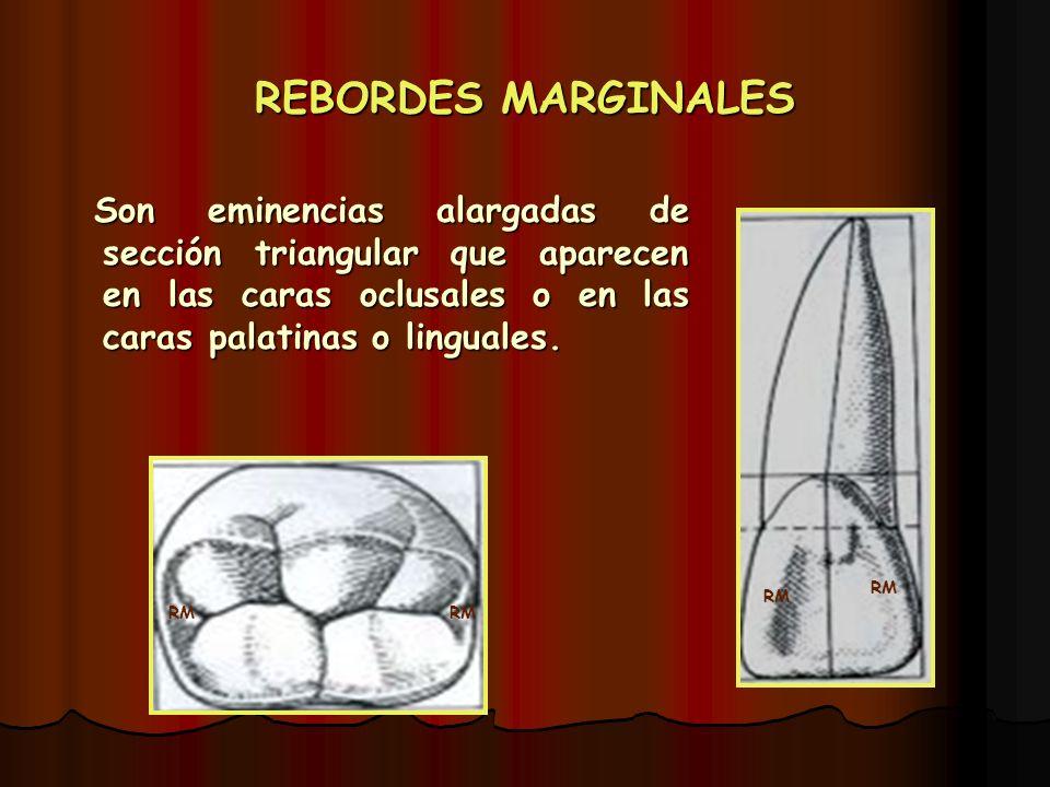 REBORDES MARGINALES Son eminencias alargadas de sección triangular que aparecen en las caras oclusales o en las caras palatinas o linguales. Son emine