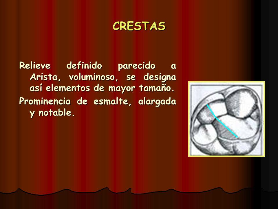CRESTAS Relieve definido parecido a Arista, voluminoso, se designa así elementos de mayor tamaño. Prominencia de esmalte, alargada y notable.