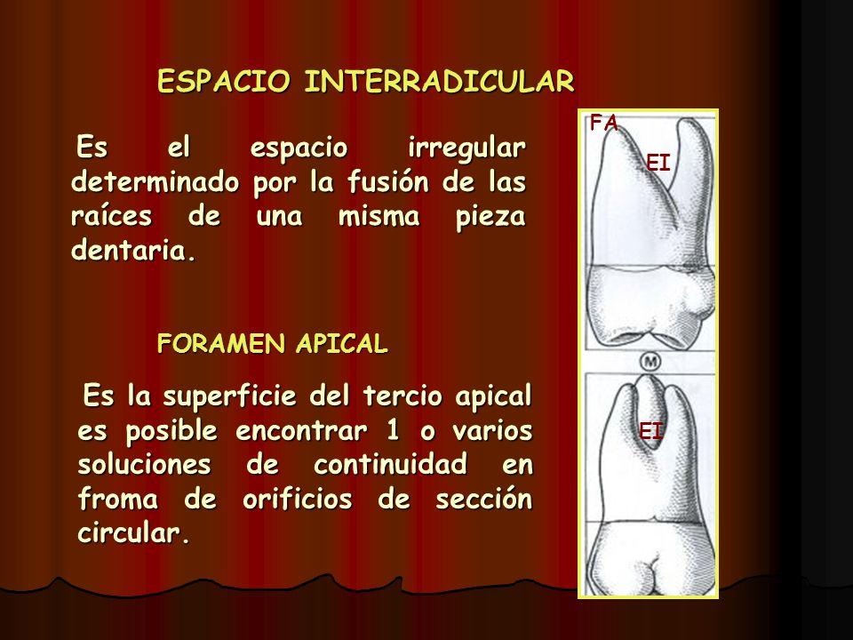 ESPACIO INTERRADICULAR Es el espacio irregular determinado por la fusión de las raíces de una misma pieza dentaria. Es el espacio irregular determinad