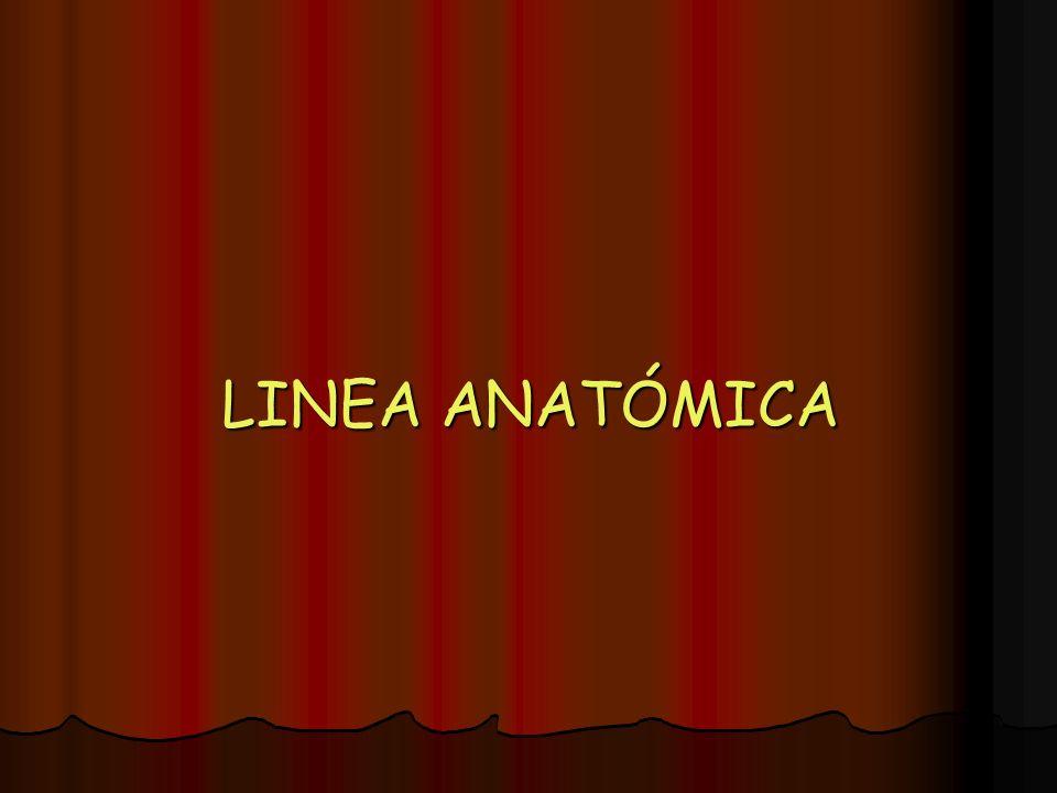 LINEA ANATÓMICA