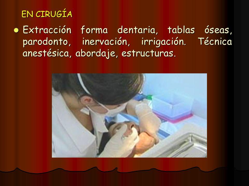 EN CIRUGÍA Extracción forma dentaria, tablas óseas, parodonto, inervación, irrigación. Técnica anestésica, abordaje, estructuras. Extracción forma den
