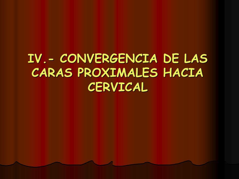 IV.- CONVERGENCIA DE LAS CARAS PROXIMALES HACIA CERVICAL