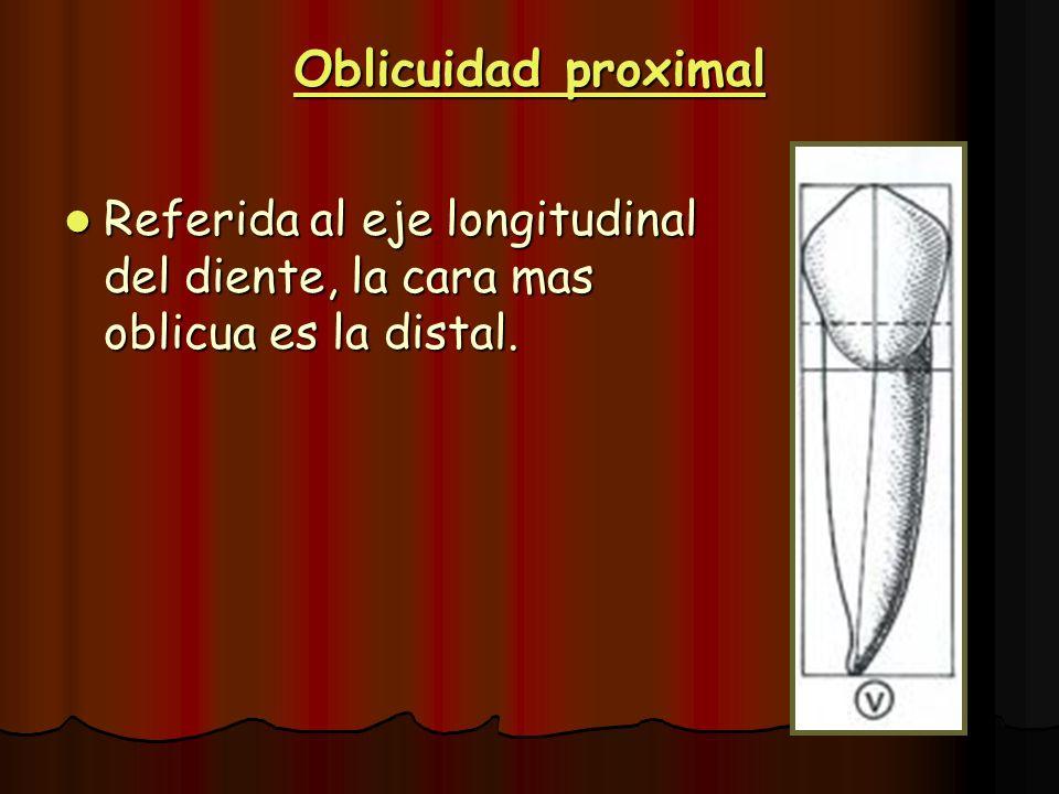 Oblicuidad proximal Referida al eje longitudinal del diente, la cara mas oblicua es la distal. Referida al eje longitudinal del diente, la cara mas ob