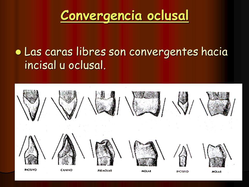 Convergencia oclusal Las caras libres son convergentes hacia incisal u oclusal. Las caras libres son convergentes hacia incisal u oclusal.