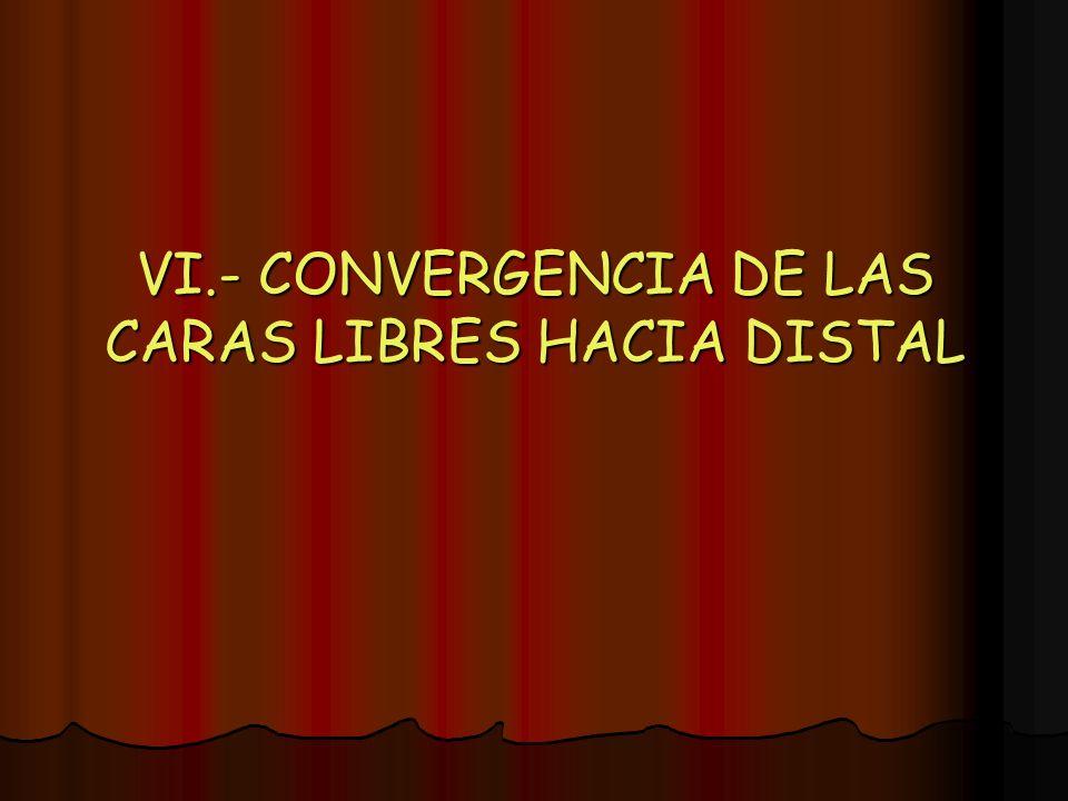 VI.- CONVERGENCIA DE LAS CARAS LIBRES HACIA DISTAL