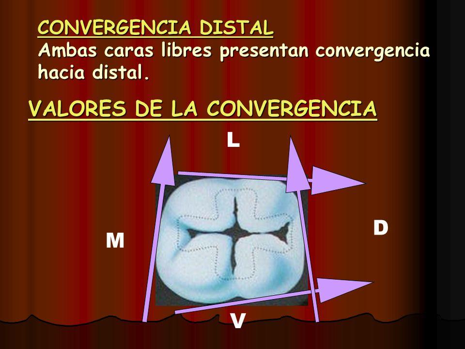 CONVERGENCIA DISTAL Ambas caras libres presentan convergencia hacia distal. VALORES DE LA CONVERGENCIA M D L V
