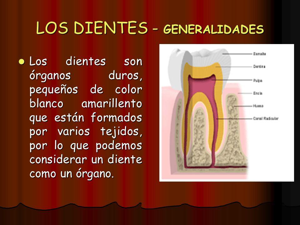 LOS DIENTES - GENERALIDADES Los dientes son órganos duros, pequeños de color blanco amarillento que están formados por varios tejidos, por lo que pode