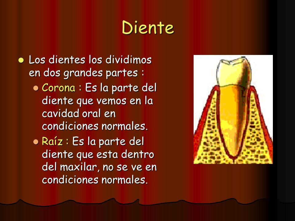 Diente Los dientes los dividimos en dos grandes partes : Los dientes los dividimos en dos grandes partes : Corona : Es la parte del diente que vemos e