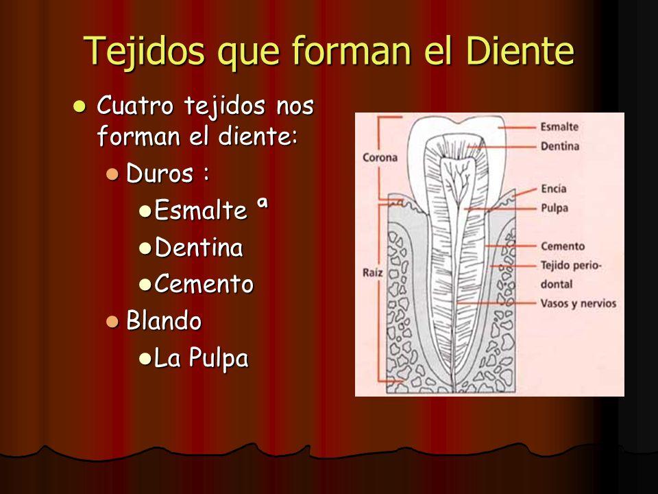 Tejidos que forman el Diente Cuatro tejidos nos forman el diente: Cuatro tejidos nos forman el diente: Duros : Duros : Esmalte ª Esmalte ª Dentina Den