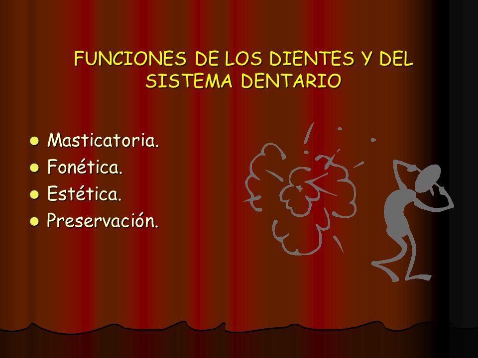 FUNCIONES DE LOS DIENTES Y DEL SISTEMA DENTARIO Masticatoria. Masticatoria. Fonética. Fonética. Estética. Estética. Preservación. Preservación.