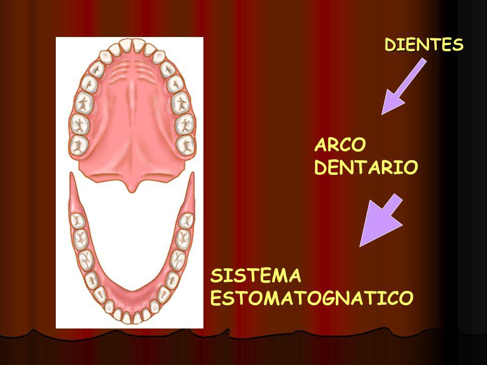 EN ORTODONCIA Alineamiento normal de dientes en caso de anomalías de maxilares, antes se debe conocer la posición adecuada de deintes y estructuras de sostén.