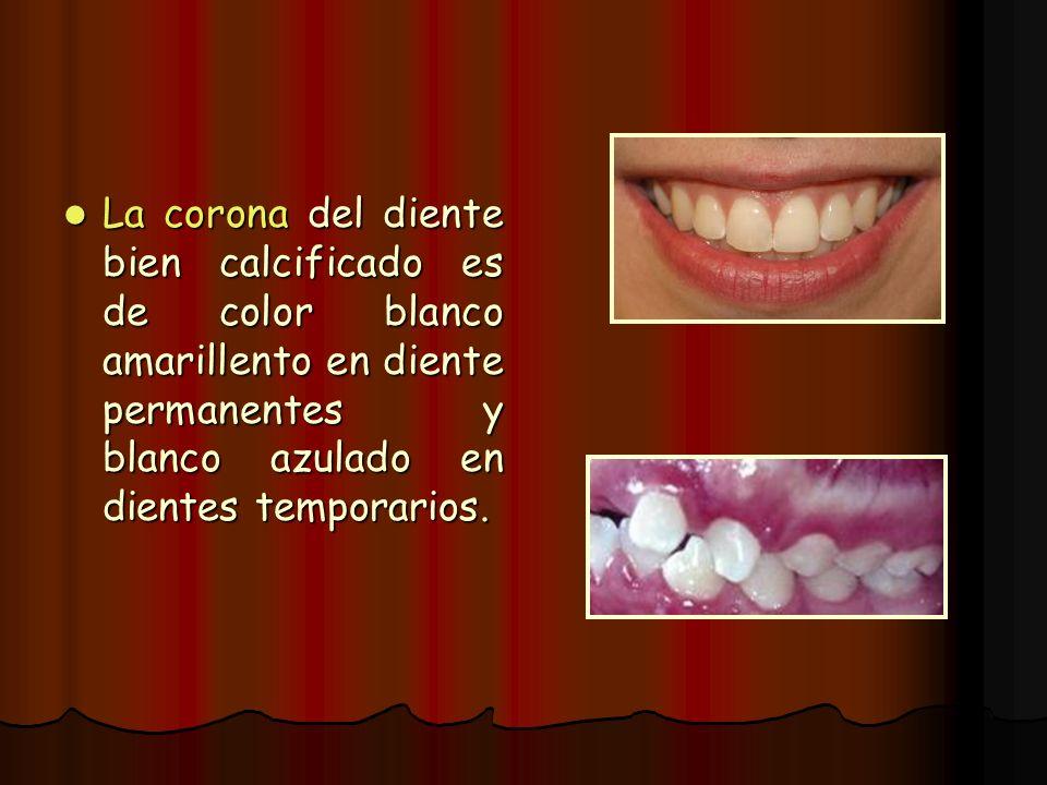 La corona del diente bien calcificado es de color blanco amarillento en diente permanentes y blanco azulado en dientes temporarios. La corona del dien