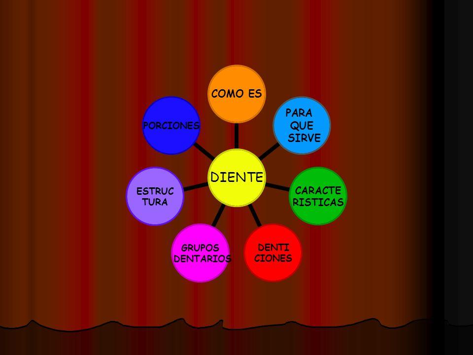 Sistema Dentario Los dientes se disponen uno tras otro formando arcos dentarios.