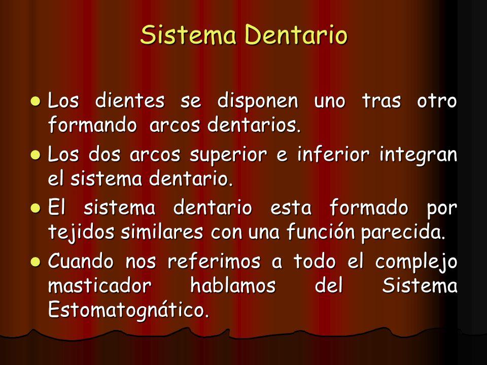 Sistema Dentario Los dientes se disponen uno tras otro formando arcos dentarios. Los dientes se disponen uno tras otro formando arcos dentarios. Los d