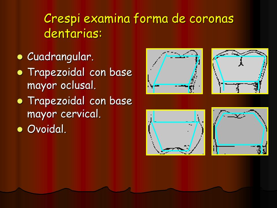 Crespi examina forma de coronas dentarias: Cuadrangular. Cuadrangular. Trapezoidal con base mayor oclusal. Trapezoidal con base mayor oclusal. Trapezo