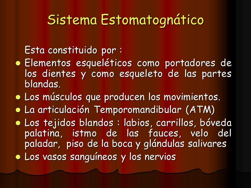 Sistema Estomatognático Esta constituido por : Elementos esqueléticos como portadores de los dientes y como esqueleto de las partes blandas. Elementos