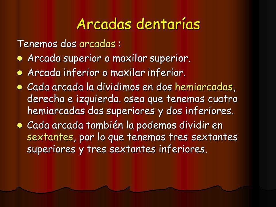 Arcadas dentarías Tenemos dos arcadas : Arcada superior o maxilar superior. Arcada superior o maxilar superior. Arcada inferior o maxilar inferior. Ar