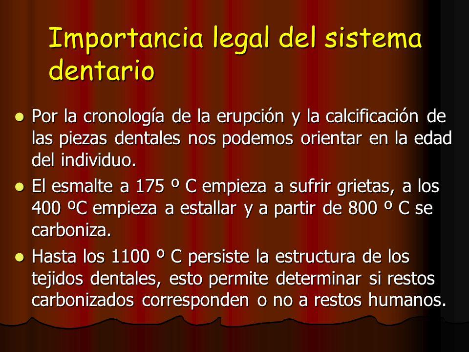 Importancia legal del sistema dentario Por la cronología de la erupción y la calcificación de las piezas dentales nos podemos orientar en la edad del