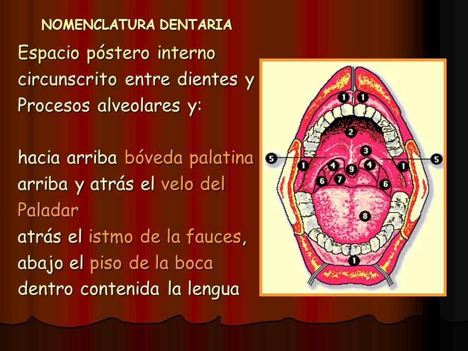 NOMENCLATURA DENTARIA Espacio póstero interno circunscrito entre dientes y Procesos alveolares y: hacia arriba bóveda palatina arriba y atrás el velo