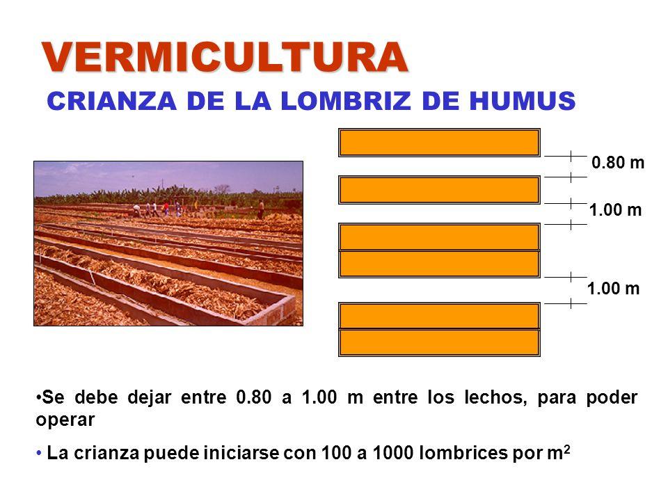 VERMICULTURA CRIANZA DE LA LOMBRIZ DE HUMUS Se debe dejar entre 0.80 a 1.00 m entre los lechos, para poder operar La crianza puede iniciarse con 100 a