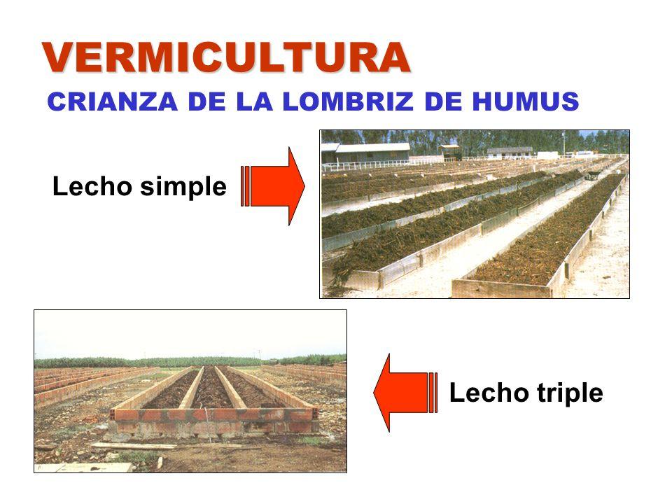 VERMICULTURA CRIANZA DE LA LOMBRIZ DE HUMUS Lecho simple Lecho triple
