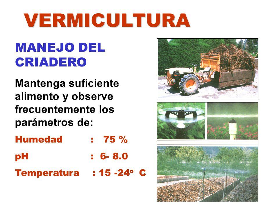 VERMICULTURA MANEJO DEL CRIADERO Mantenga suficiente alimento y observe frecuentemente los parámetros de: Humedad : 75 % pH : 6- 8.0 Temperatura : 15
