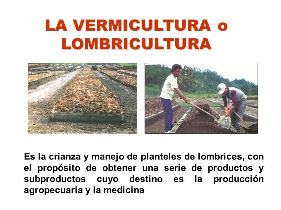 LA VERMICULTURA o LOMBRICULTURA Es una biotecnología que permite el reciclaje de los desechos orgánicos procedentes del sector rural o urbano (agrícola o agroindustrial) Es la elaboración de compost con ayuda de las lombrices.