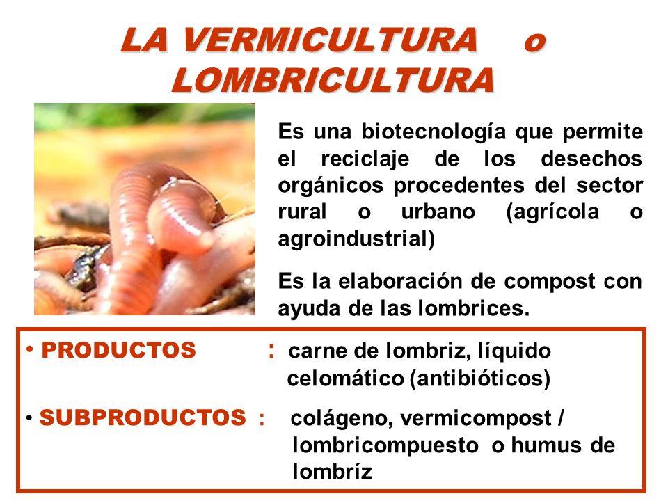 VERMICULTURA LA LOMBRIZ DE HUMUS o ROJA CALIFORNIANA (Eisenia foetida ) Expulsa el 60 % de la materia orgánica después de su digestión.