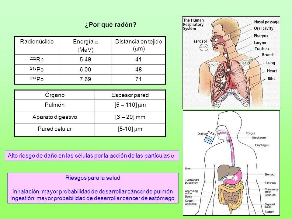 Radionúclido Energía MeV) Distancia en tejido ( m) 222 Rn5,4941 218 Po6,0048 214 Po7,6971 Alto riesgo de daño en las células por la acción de las part