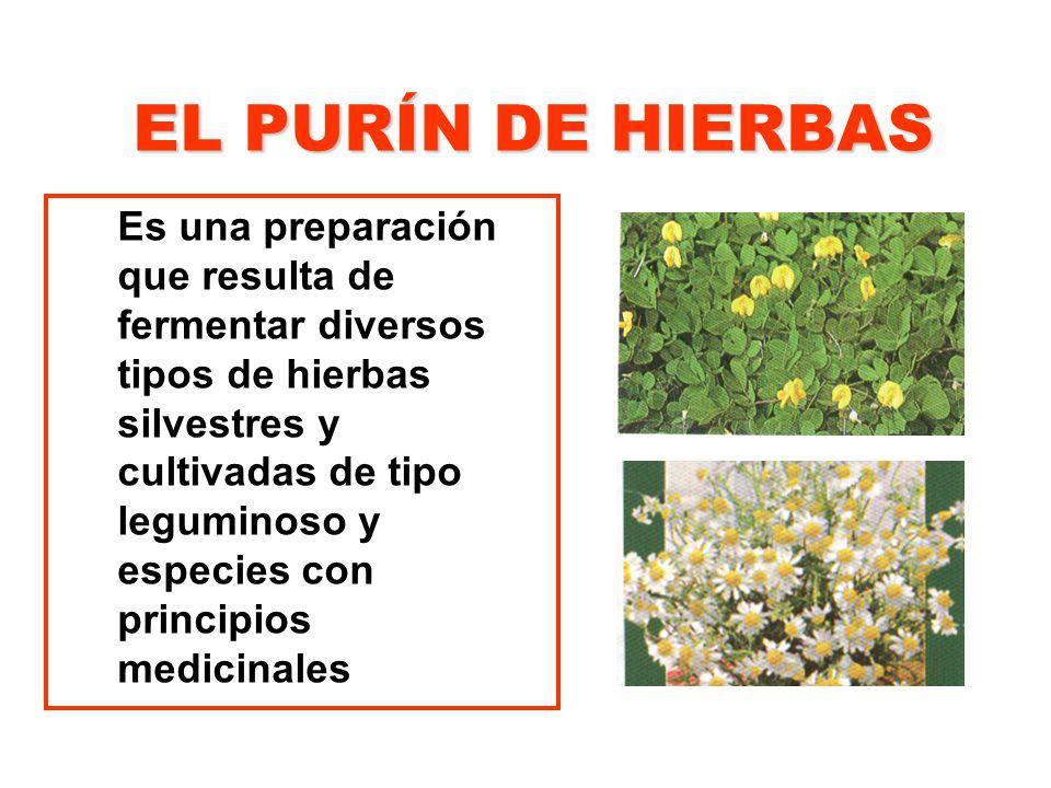 EL PURÍN DE HIERBAS Es una preparación que resulta de fermentar diversos tipos de hierbas silvestres y cultivadas de tipo leguminoso y especies con pr