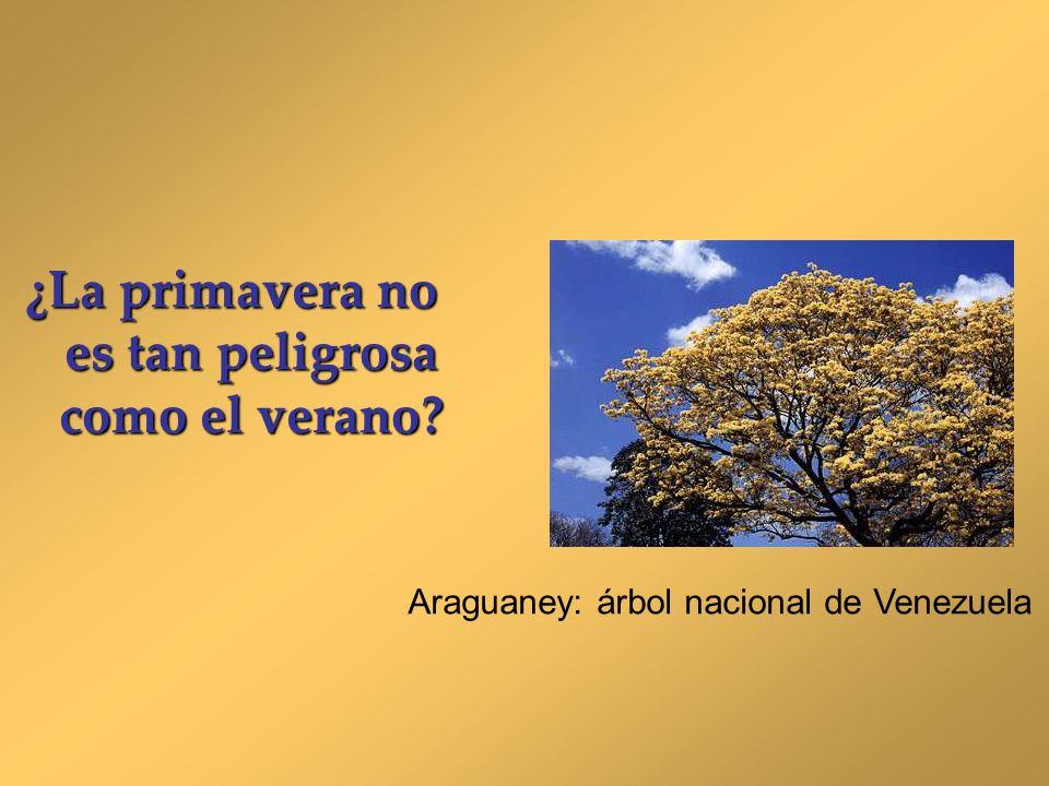 ¿La primavera no es tan peligrosa como el verano? Araguaney: árbol nacional de Venezuela