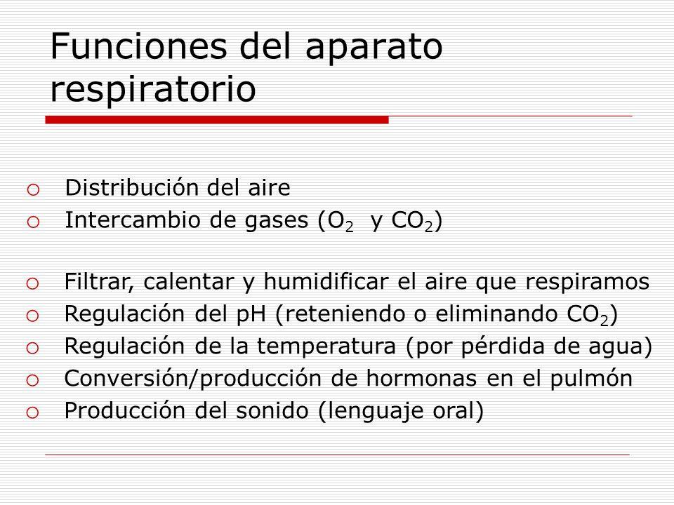 Funciones del aparato respiratorio o Filtrar, calentar y humidificar el aire que respiramos o Regulación del pH (reteniendo o eliminando CO 2 ) o Regu