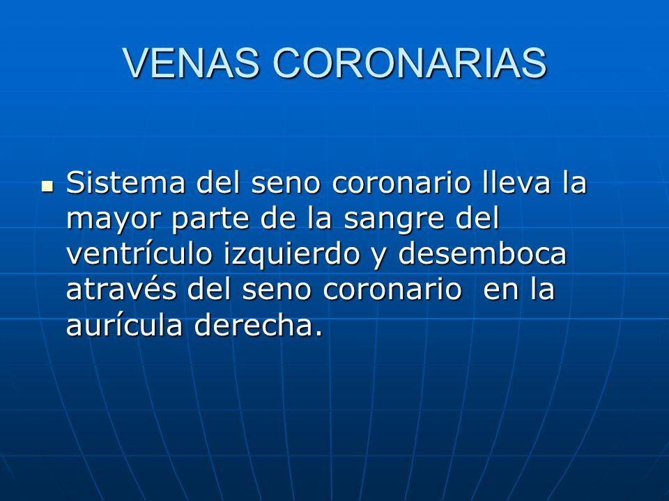 VENAS CORONARIAS Sistema del seno coronario lleva la mayor parte de la sangre del ventrículo izquierdo y desemboca através del seno coronario en la au