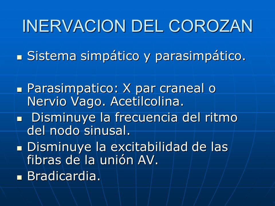 INERVACION DEL COROZAN Sistema simpático y parasimpático. Sistema simpático y parasimpático. Parasimpatico: X par craneal o Nervio Vago. Acetilcolina.