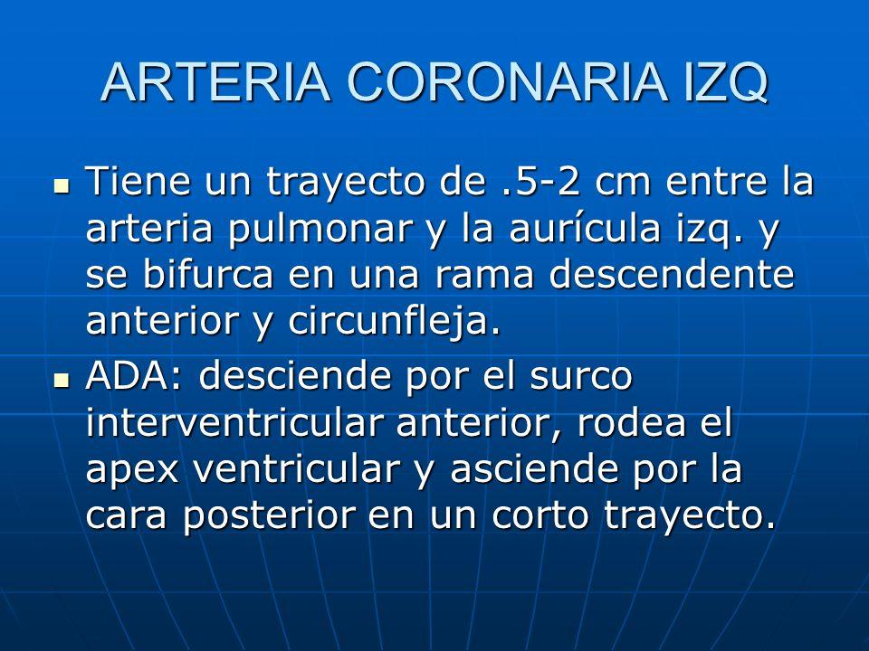 ARTERIA CORONARIA IZQ Tiene un trayecto de.5-2 cm entre la arteria pulmonar y la aurícula izq. y se bifurca en una rama descendente anterior y circunf