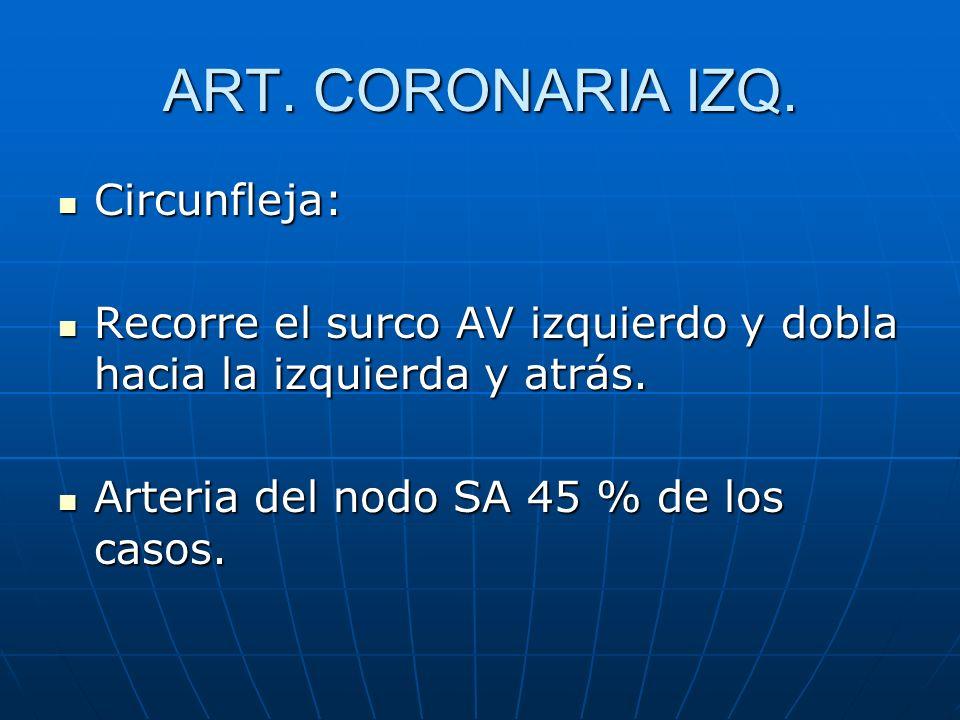 ART. CORONARIA IZQ. Circunfleja: Circunfleja: Recorre el surco AV izquierdo y dobla hacia la izquierda y atrás. Recorre el surco AV izquierdo y dobla
