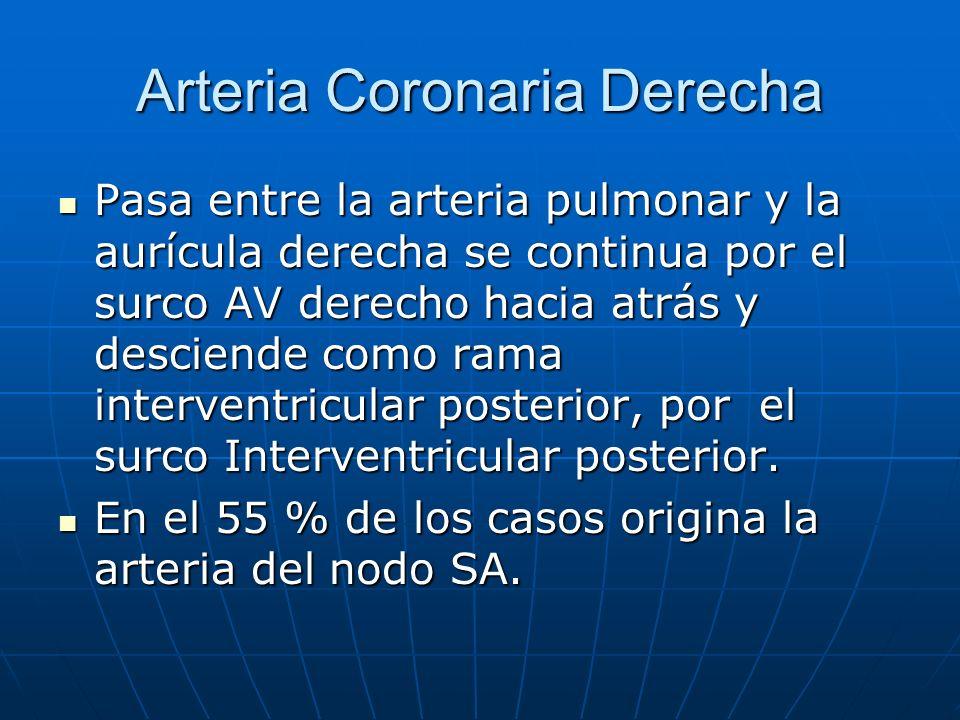 Arteria Coronaria Derecha Pasa entre la arteria pulmonar y la aurícula derecha se continua por el surco AV derecho hacia atrás y desciende como rama i