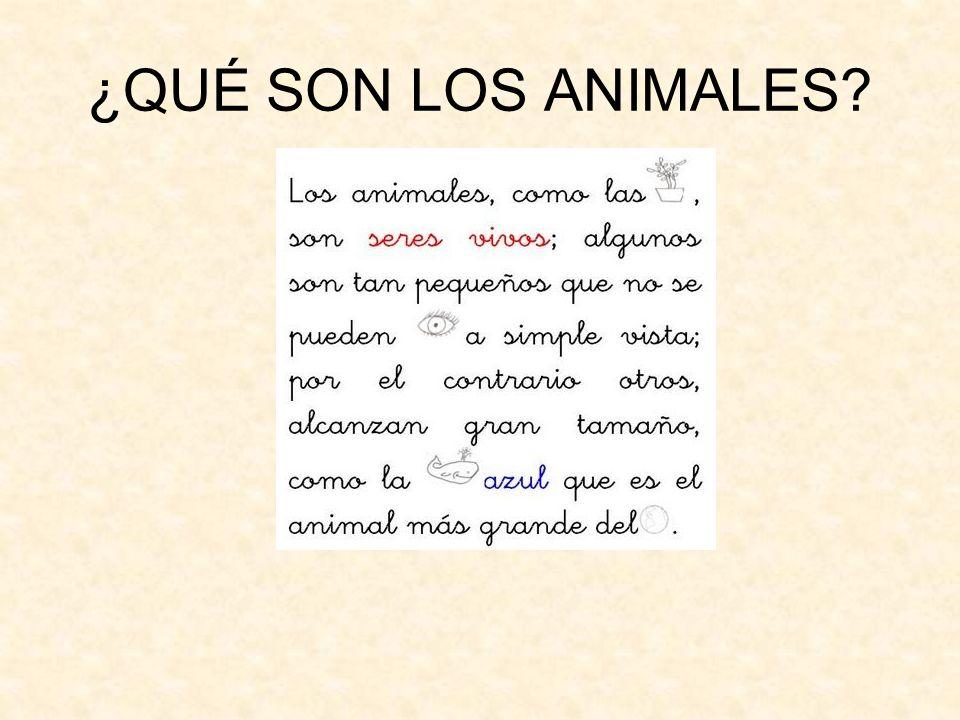 ¿QUÉ SON LOS ANIMALES?