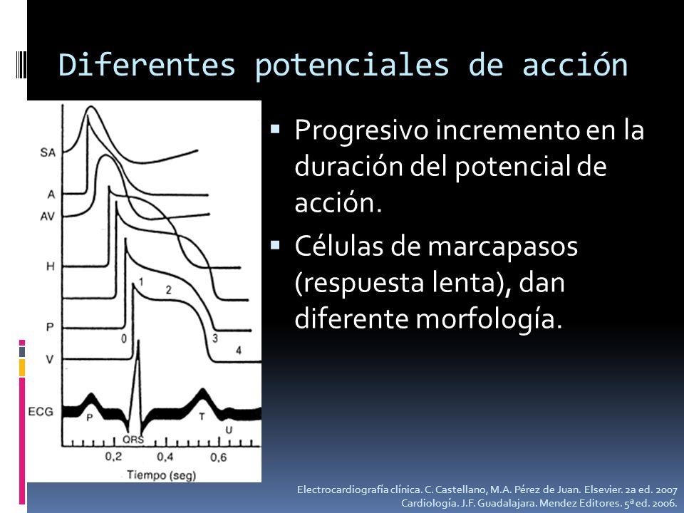 Diferentes potenciales de acción Progresivo incremento en la duración del potencial de acción. Células de marcapasos (respuesta lenta), dan diferente